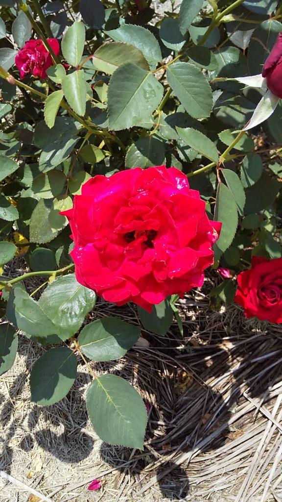 梅雨時の花6月14日 大池公園 🌺